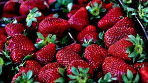aarbeid strawberry Engelse vertaling